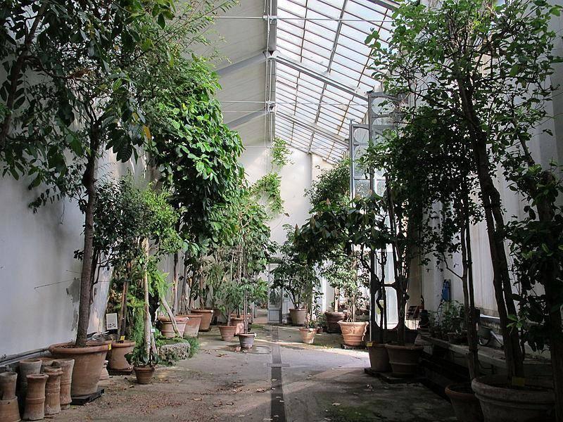 Visite guidate nelle serre del giardino dei semplici orto for Giardino orto botanico firenze