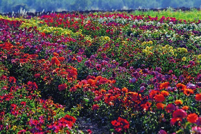 Mostra autunnale di piante e fiori giardino dell - Giardino dell orticoltura firenze ...